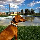Parque actividades fisioterapia perros