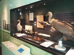 Collection ornithologique