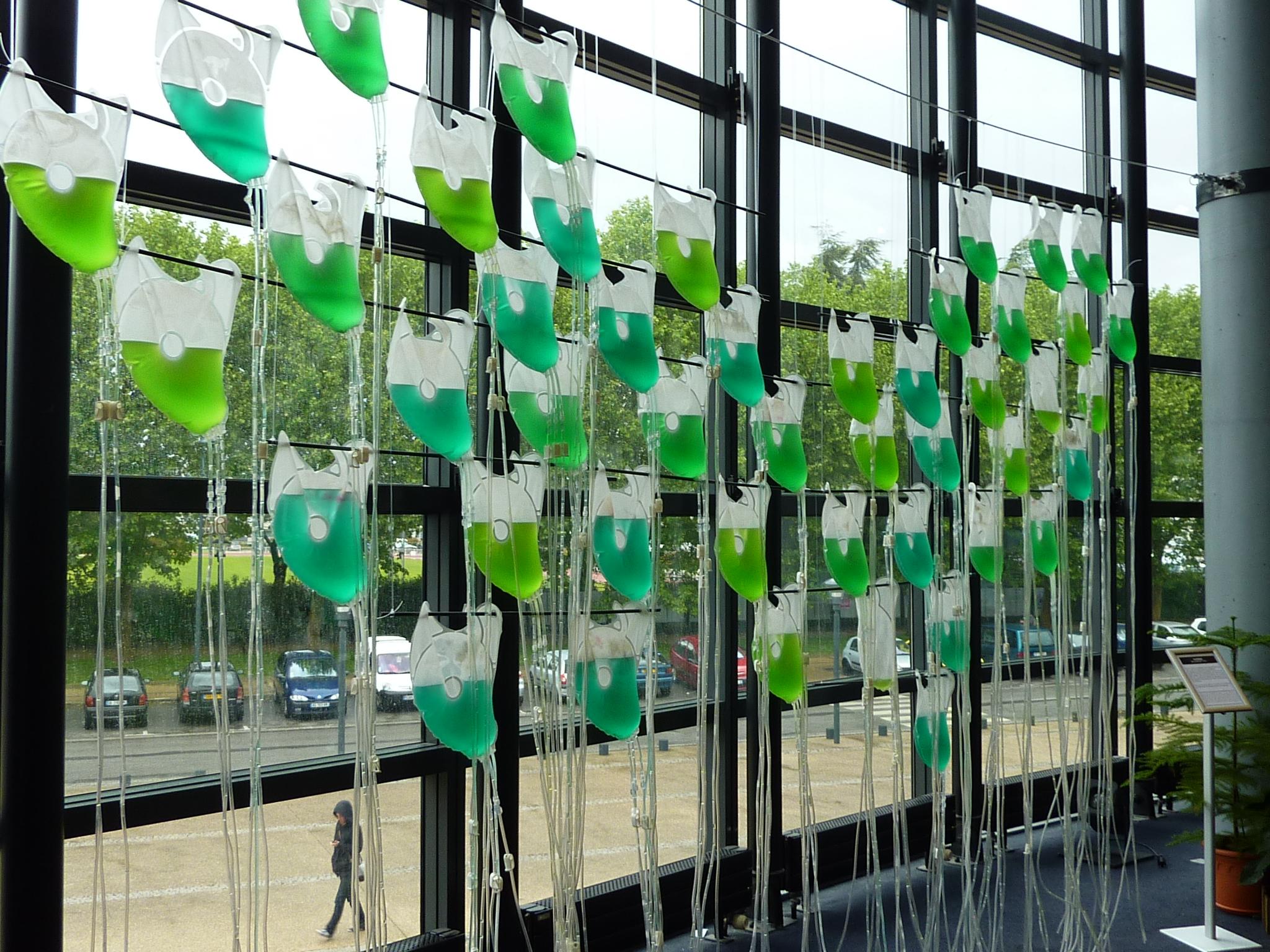 BioBag de culture d'algues