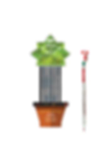 Plantable Pencils & Pens