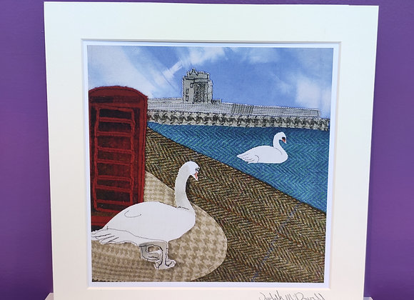 Swans in Broughty Ferry, Dundee