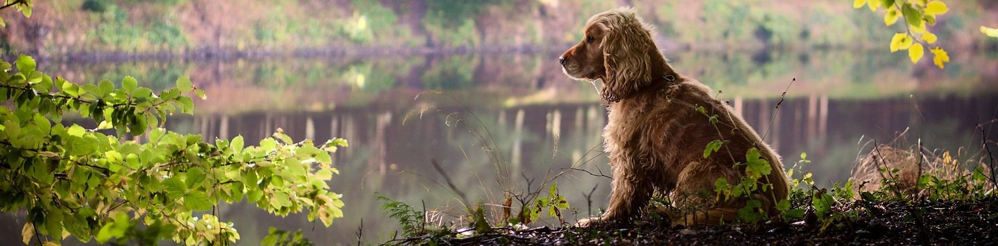 dogs-river-lake-nature-leaves-twigs-dog-