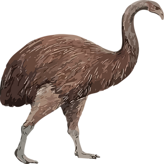 Graphic illustration of moa