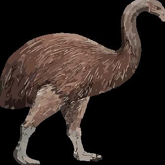 Graphic illustration of moa
