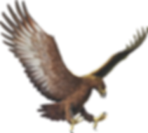 Graphic illustration of Haast eagle