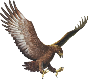 Graphic illustration or Haast eagle