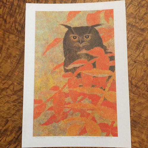 Postcard 'Horn Owl & Autumn Colours'