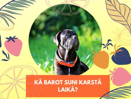 Kā barot suni karstā laikā?