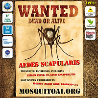 WANTED_Aedes scapularis_web_1080x1080.jpg