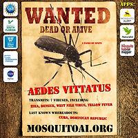 WANTED_Aedes vittatus_web_1080x1080.jpg