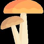 mushrooms (1).png