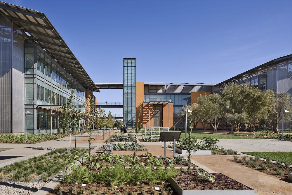 加州大學戴維斯分校UC Davis (UCD)校園一隅,提供學生現代化農場進行實作