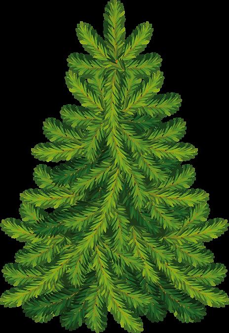 fir-tree-clip-art-29.png
