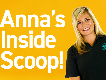 Anna's Inside Scoop with Kayleigh Shields