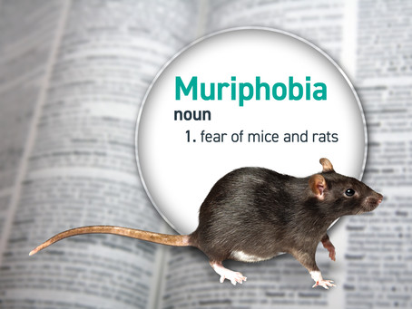 Not So Scary Animals:  Muriphobia