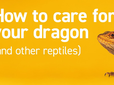How to Care for your Dragon (and Other Reptiles)