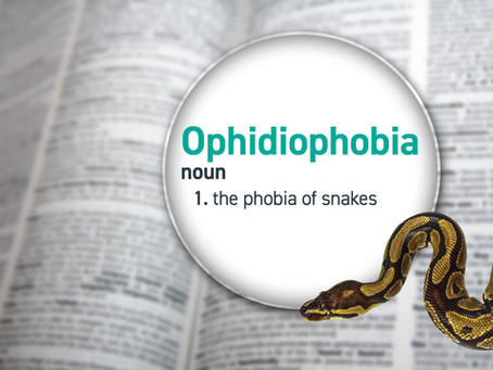 Not So Scary Animals: Ophidiophobia