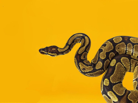 Do Snakes Fart? ...And Other Questions