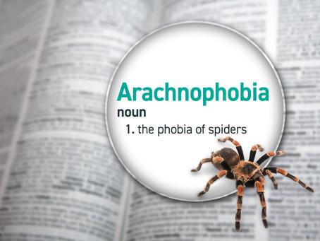 Not So Scary Animals: Arachnophobia