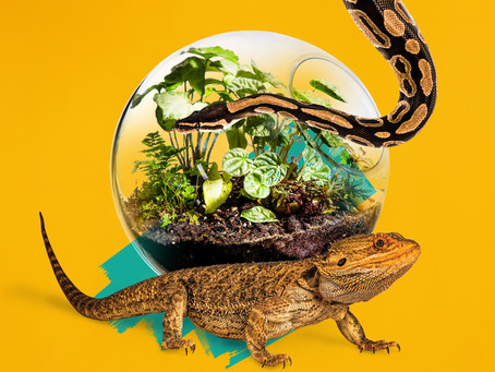 How to Improve your Reptile's life with Bioactive Enclosures