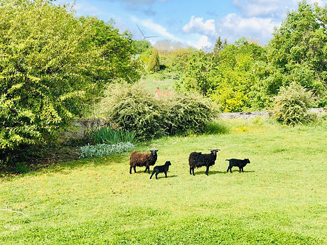 Paradia - Ecopâturage professionnel mouton d'Ouessant