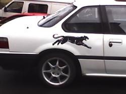 pantheron2