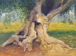 Ancient Olive - Art & Soul