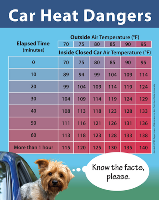 Image result for dog temps in car