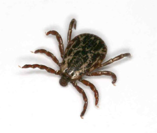 Quick and easy pest removal ... in just a tick!