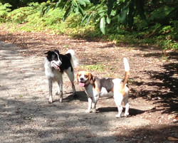 Happy pups in the sun