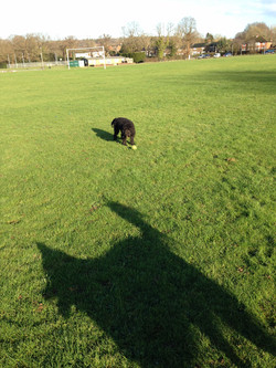 Giant dog spotted in Hurst Green