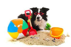 Top tips to keeping your pets healthy and well this summer