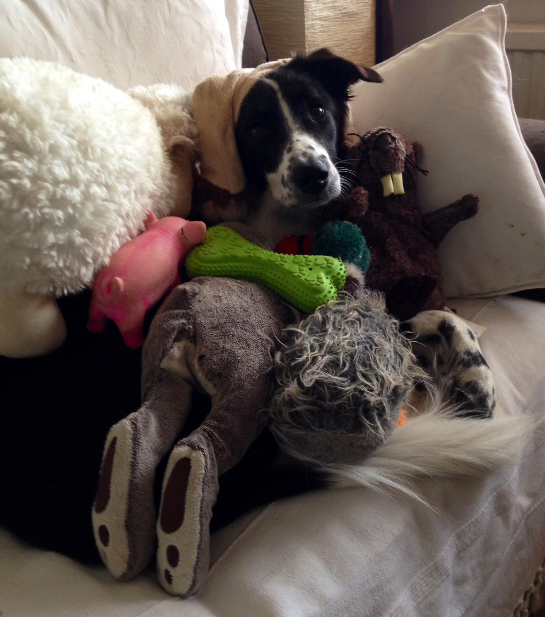 Savannah & toys