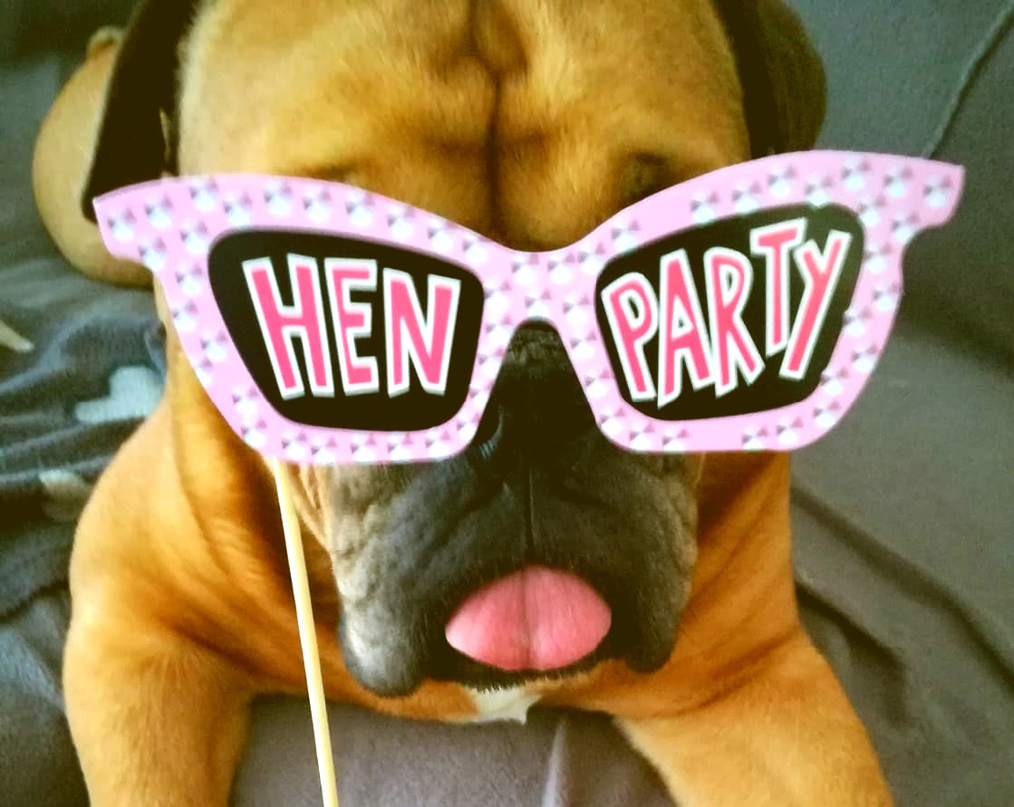 PartyWandDogHenParty