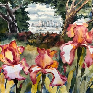 Dancing Irises In City Oasis