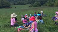 waldorf in pasture.jpg