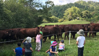 waldorf with cows.jpg