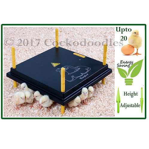 WP25 Chick Brooder/Heat Plate for upto 20 chicks