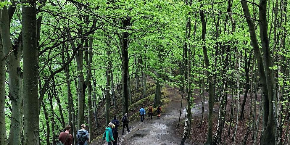 Discgolf i skoven
