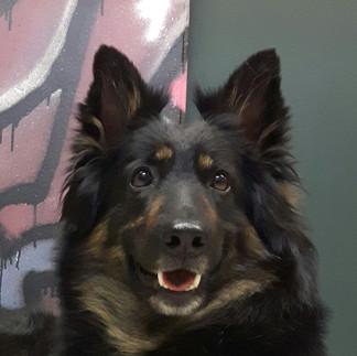 Certifierad social tjänstehund, terapi-och skolhund