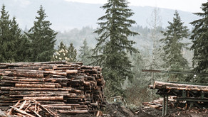 Lumber Prices Are Rising—Here's What That Means for You