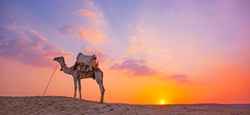 CamelSunsetWide