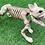 Thumbnail: Skeleton Fido