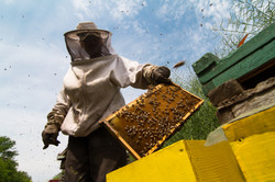 beekeeper-working-on-beehive-P4GQW5H