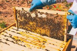 beekeeper-with-his-bees-75RUAXB