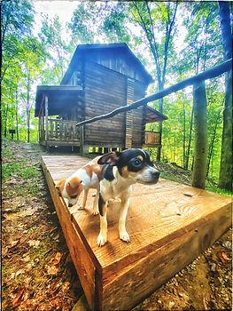 Sugar Maple Cabin Dogs - Cabin 2.jpeg