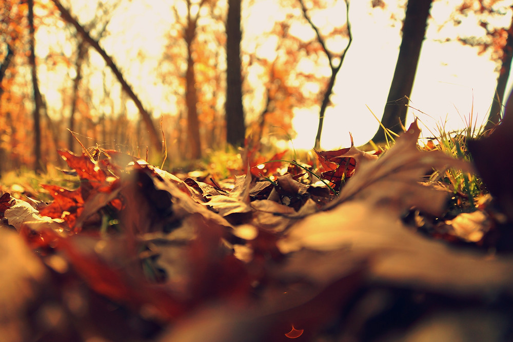 Autumn Leaves Music Recommendations