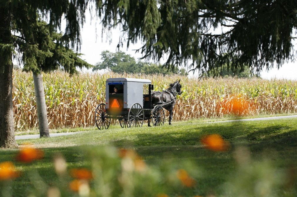 Amish neighbors going by