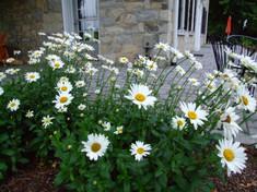 Flowers on side of Inn