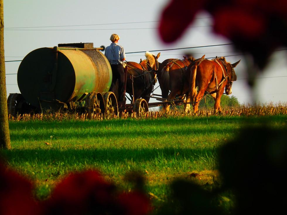 Amish Farming